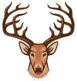 Cabeça dos cervos Fotos de Stock Royalty Free