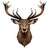 Cabeça dos cervos ilustração stock