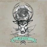 Cabeça dos cervos e cara dos chifres Foto de Stock Royalty Free