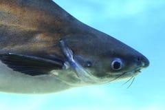Cabeça 2 dos peixes foto de stock