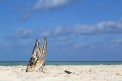 A cabeça dos peixes com os dentes grandes e afiados Fotografia de Stock