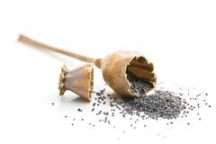 Cabeça e semente abertas da papoila Imagens de Stock Royalty Free