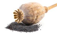 Cabeça e sementes da papoila Fotos de Stock Royalty Free