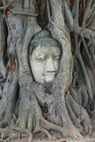 Cabeça em raizes da árvore, Wat Mahathat da Buda, Ayutthaya Foto de Stock