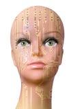 Cabeça fêmea do cyborg isolada no fundo branco Fotografia de Stock