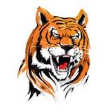 Cabeça irritada Tiger Illustration Vetora no rugido para o cartaz, o projeto de cartão, o projeto etc. da tampa foto de stock royalty free