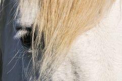 Cabeça, olho e juba de um cavalo branco fotografia de stock royalty free