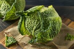 Cabeça orgânica crua do couve-de-milão Imagens de Stock
