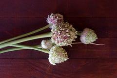 Cabeça plenamente desenvolvido da semente do alho-porro fotos de stock royalty free