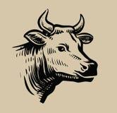 Cabeça preta da vaca Imagem de Stock Royalty Free
