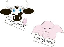 Cabeça preto e branco da vaca, olhos azuis, flor cor-de-rosa, a cabeça do porco cor-de-rosa, a inscrição dos produtos orgânicos Fotos de Stock Royalty Free