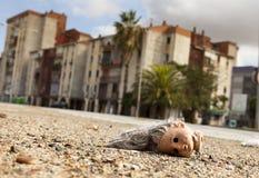 Cabeça quebrada abandonada da boneca Imagem de Stock