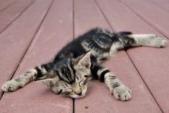 Cabeça sonolento Foto de Stock