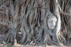 Cabeça surpreendente da Buda nas árvores Fotografia de Stock Royalty Free
