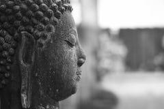 A cabeça velha da Buda é deixada fora foto de stock royalty free