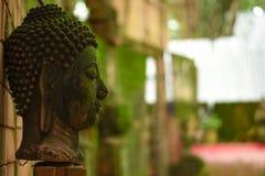 A cabeça velha da Buda foi deixada fora fotos de stock royalty free
