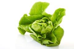 Cabeça verde da salada Fotos de Stock