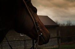 Cabeça vermelha do ` s do cavalo contra o céu alaranjado Imagens de Stock