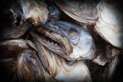 Cabeças assustadores dos peixes do bacalhau Fotografia de Stock Royalty Free