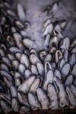 Cabeças congeladas dos peixes das pescadas Foto de Stock Royalty Free