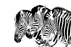 Cabeças da zebra ilustração do vetor