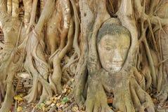 Cabeças de Buddha Fotos de Stock Royalty Free