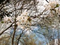 Cabeças de flor branca como visto de baixo de imagens de stock royalty free