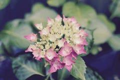Cabeças de flor no jardim Fotos de Stock Royalty Free