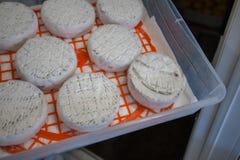 Cabeças do queijo do envelhecimento Imagens de Stock Royalty Free