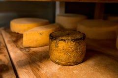 cabeças do queijo no cofre-forte nas prateleiras foto de stock