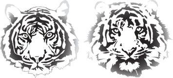 Cabeças do tigre na interpretação do inclinação Foto de Stock