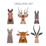 Cabeças dos animais do vetor ajustadas Vaca do cavalo do asno do antílope dos cervos da Lama ilustração royalty free