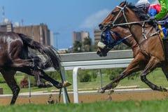 Cabeças dos pés da ação da corrida de cavalos Fotos de Stock