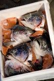 Cabeças dos peixes fotos de stock royalty free