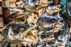 Cabeças dos peixes Imagem de Stock