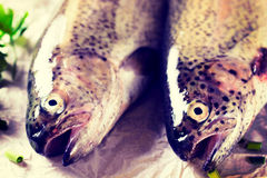 Cabeças dos peixes Imagem de Stock Royalty Free