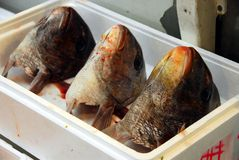 Cabeças dos peixes Imagens de Stock Royalty Free