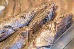 Cabeças dos peixes das pescadas Imagens de Stock