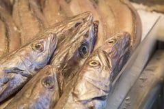 Cabeças dos peixes das pescadas Foto de Stock Royalty Free