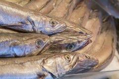 Cabeças dos peixes das pescadas Fotografia de Stock