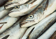 Cabeças dos peixes de bacalhau Fotografia de Stock Royalty Free