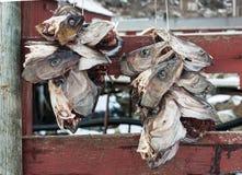 Cabeças dos peixes de bacalhau pendurados secando Fotos de Stock