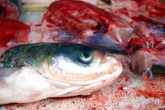 Cabeças dos peixes e carne de peixes Fotos de Stock