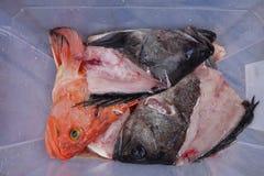 Cabeças dos peixes frescos no seward Foto de Stock