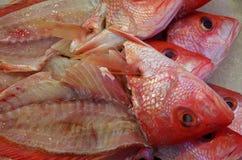 Cabeças dos peixes no gelo Fotografia de Stock Royalty Free