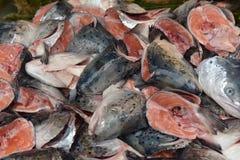 Cabeças dos peixes para a sopa Foto de Stock Royalty Free