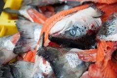 Cabeças dos peixes salmon Imagens de Stock