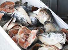 Cabeças dos peixes salmon no mercado Fotografia de Stock Royalty Free