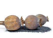 Cabeças e sementes da papoila fotos de stock royalty free