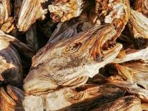 Cabeças secadas dos peixes, Noruega Fotos de Stock Royalty Free